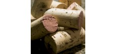 Initiation à la Dégustation des Vins Rouges